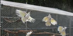 flightwhite