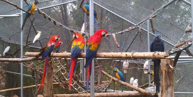Volunteer At Garuda Aviary!