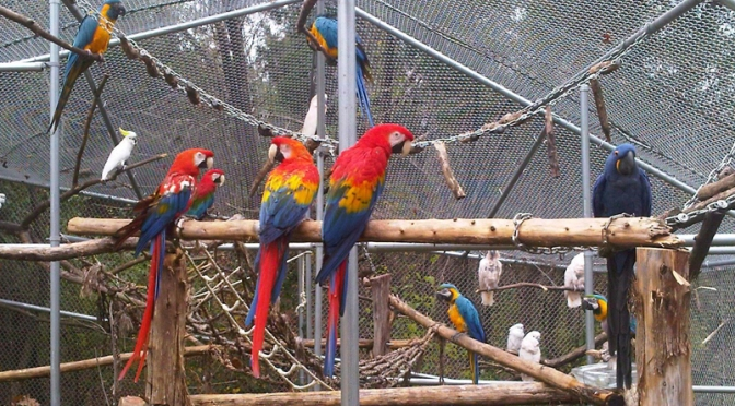 Volunteer At Garuda Aviary!