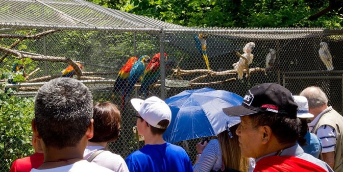 Visitors view the flight cage