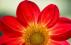 Leslie flower