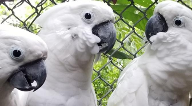 Sponsor a Rescued Parrot